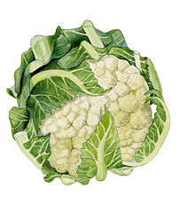 4322993667_9b247217e1_m.jpgcauliflower