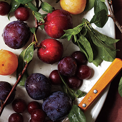 1107p118-plum-varieties-l